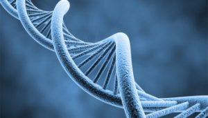 adn-vie-secrete-des-genes